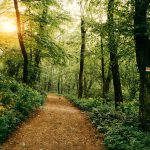 Hiking Trails in Washington Township